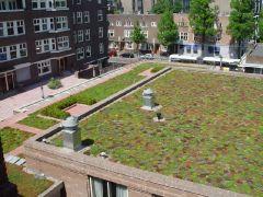 Mos-sedum dak Amsterdams lyceum